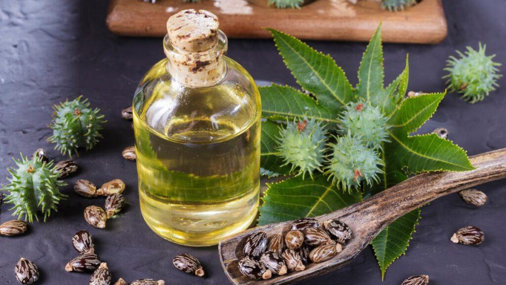 Dầu thầu dầu được chiết xuất từ hạt thầu dầu. Loại dầu này được ứng dụng rộng rãi trong việc chữa bệnh, làm đẹp cho da.
