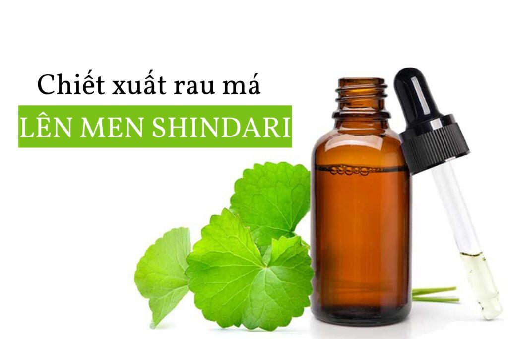 Chiết xuất rau má lên men Shindari